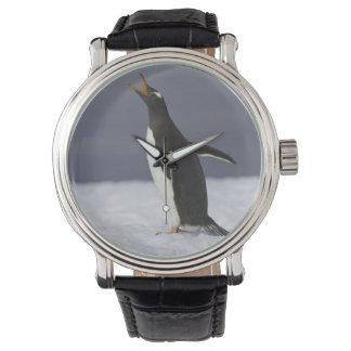 Gentoo penguin (Pygoscelis papua) adult bird Watch