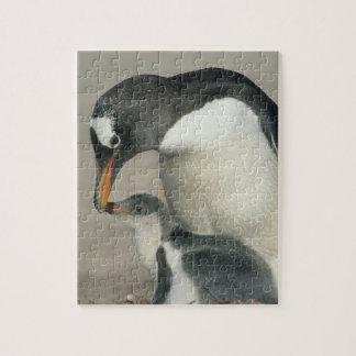 Gentoo Penguin, (Pygoscelis papua), adult Puzzles