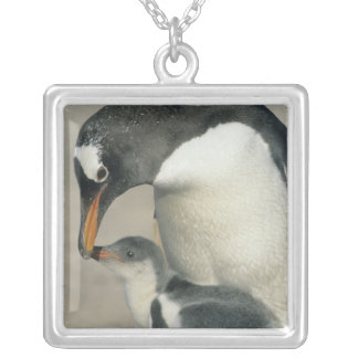 Gentoo Penguin, (Pygoscelis papua), adult Silver Plated Necklace