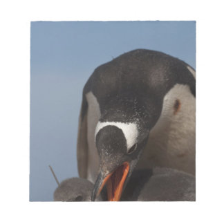 Gentoo Penguin (Pygoscelis papua) and chick 2 Notepad