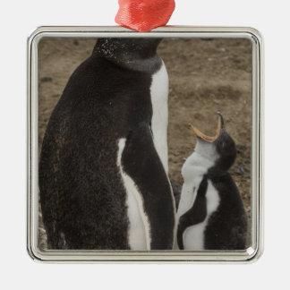 Gentoo Penguin (Pygoscelis papua) and chick Christmas Ornament