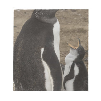 Gentoo Penguin (Pygoscelis papua) and chick Notepad