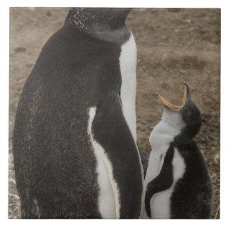 Gentoo Penguin (Pygoscelis papua) and chick Tile