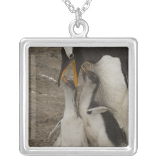 Gentoo Penguin (Pygoscelis papua) and chicks. 2 Silver Plated Necklace