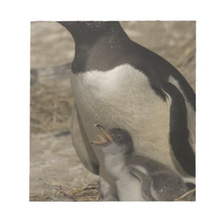 Gentoo Penguin (Pygoscelis papua) and chicks. Notepad
