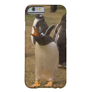 gentoo penguin, Pygoscelis papua, calling, Barely There iPhone 6 Case