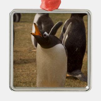 gentoo penguin, Pygoscelis papua, calling, Christmas Ornament