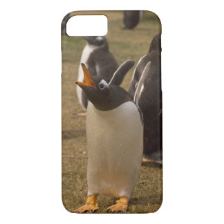 gentoo penguin, Pygoscelis papua, calling, iPhone 8/7 Case