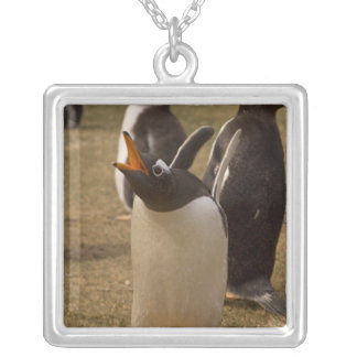 gentoo penguin, Pygoscelis papua, calling, Silver Plated Necklace