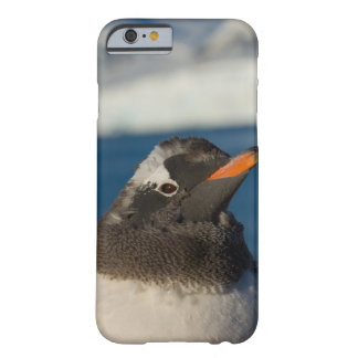 gentoo penguin, Pygoscelis Papua, chick along Barely There iPhone 6 Case