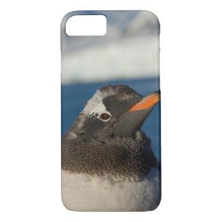 gentoo penguin, Pygoscelis Papua, chick along iPhone 8/7 Case