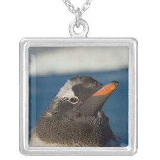 gentoo penguin, Pygoscelis Papua, chick along Silver Plated Necklace