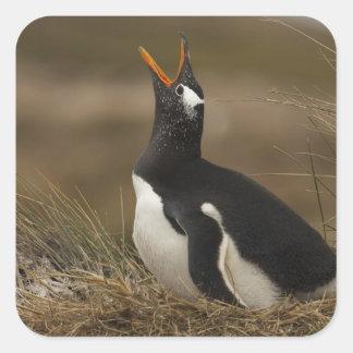 Gentoo Penguin (Pygoscelis papua) colony on the Square Sticker