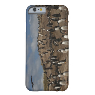 Gentoo Penguin (Pygoscelis papua) colony on West Barely There iPhone 6 Case