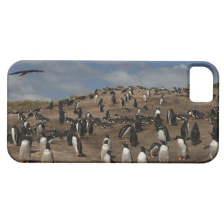 Gentoo Penguin (Pygoscelis papua) colony on West iPhone 5 Cover