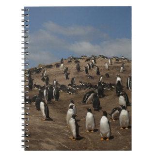 Gentoo Penguin (Pygoscelis papua) colony on West Note Book