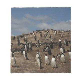 Gentoo Penguin (Pygoscelis papua) colony on West Notepad