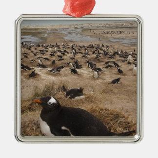 Gentoo Penguin (Pygoscelis papua) colony, West 2 Christmas Ornament