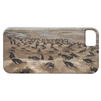 Gentoo Penguin (Pygoscelis papua) colony, West iPhone 5 Case