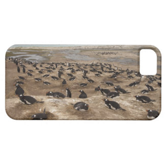 Gentoo Penguin (Pygoscelis papua) colony, West iPhone 5 Cases