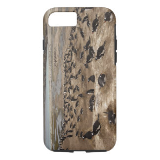Gentoo Penguin (Pygoscelis papua) colony, West iPhone 8/7 Case