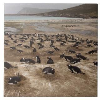 Gentoo Penguin (Pygoscelis papua) colony, West Ceramic Tiles