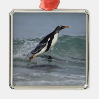 Gentoo Penguin Pygoscelis papua) coming in on Christmas Ornament