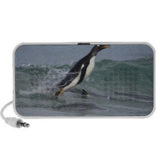 Gentoo Penguin Pygoscelis papua) coming in on Portable Speaker