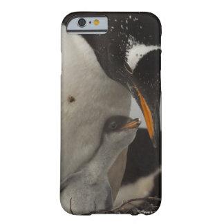 Gentoo Penguin (Pygoscelis papua) feeding chick, Barely There iPhone 6 Case