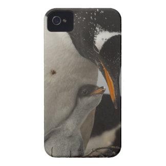Gentoo Penguin (Pygoscelis papua) feeding chick, iPhone 4 Case
