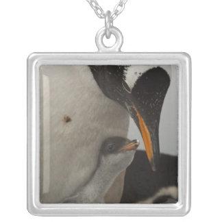 Gentoo Penguin (Pygoscelis papua) feeding chick, Square Pendant Necklace