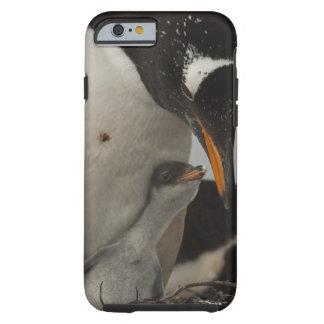 Gentoo Penguin (Pygoscelis papua) feeding chick, Tough iPhone 6 Case