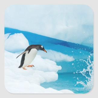 gentoo penguin, Pygoscelis Papua, jumping off an Square Sticker