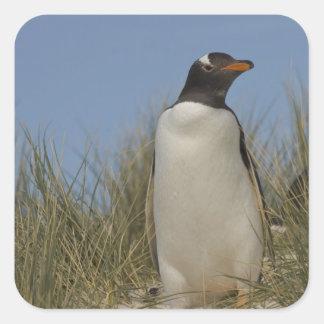 Gentoo Penguin (Pygoscelis papua), Keppel Square Sticker