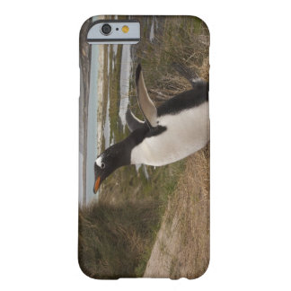Gentoo Penguin (Pygoscelis papua) on a nest, Barely There iPhone 6 Case