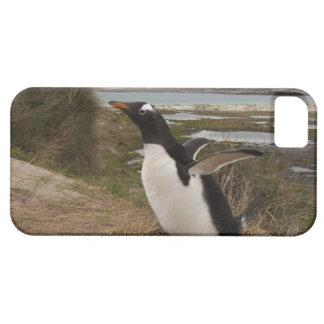Gentoo Penguin (Pygoscelis papua) on a nest, iPhone 5 Cases