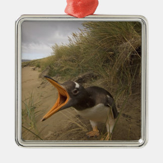 gentoo penguin, Pygoscelis papua, on Beaver Silver-Colored Square Decoration