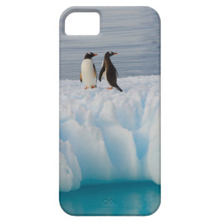 gentoo penguin, Pygoscelis Papua, on glacial ice iPhone 5 Cover