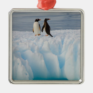 gentoo penguin, Pygoscelis Papua, on glacial ice Silver-Colored Square Decoration