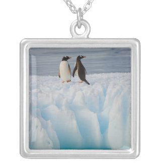 gentoo penguin, Pygoscelis Papua, on glacial ice Silver Plated Necklace