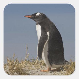 Gentoo Penguin (Pygoscelis papua) on Keppel Square Sticker