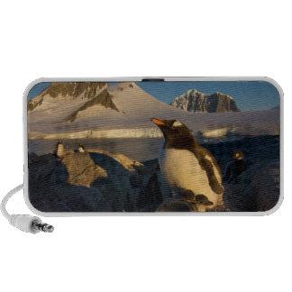 gentoo penguin, Pygoscelis Papua, parent with Laptop Speakers