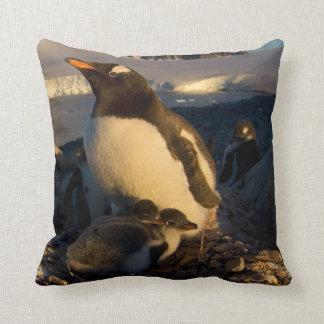 gentoo penguin, Pygoscelis Papua, parent with Throw Pillow