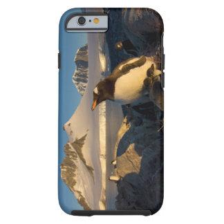 gentoo penguin, Pygoscelis Papua, parent with Tough iPhone 6 Case