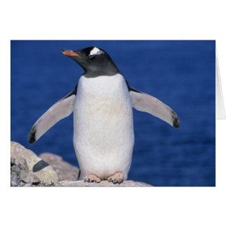 Gentoo Penguin Pygoscelis papua) Port Greeting Card