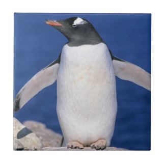 Gentoo Penguin Pygoscelis papua) Port Tile