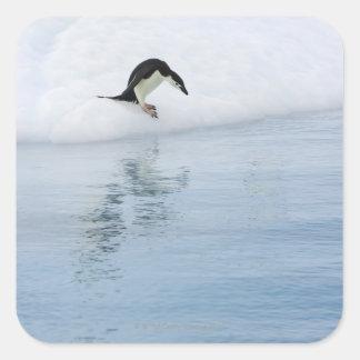 Gentoo penguin (Pygoscelis papua) Square Sticker
