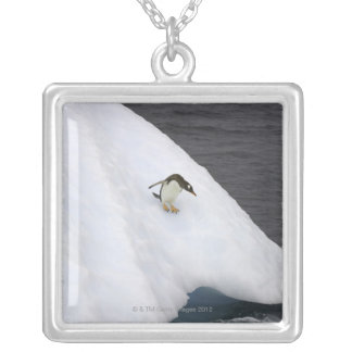 Gentoo penguin Pygoscelis papua) standing Silver Plated Necklace