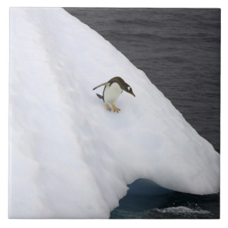 Gentoo penguin Pygoscelis papua) standing Tile