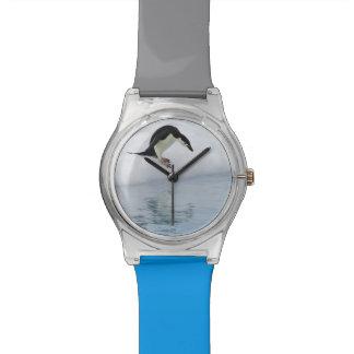 Gentoo penguin (Pygoscelis papua) Watch